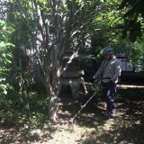 草刈り・芝刈り・除草(機械刈り) 東京都 西東京市 植木屋 本橋植木
