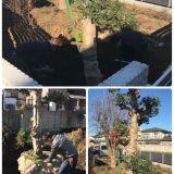 樹木の移植・庭木の植え替え・植栽 ツチヤガーデンホーム