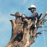 庭木の伐採・抜根 千賀造園