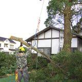 庭木の伐採・抜根 岡山BSサービス