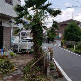 庭木の伐採・抜根 @tasukata「あ~助かった」