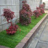 樹木の移植・庭木の植え替え・植栽 渡辺造園(東京)
