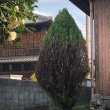 庭木の伐採・抜根 有限会社長谷屋