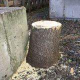 庭木の伐採・抜根 札幌クリーンエージェント㈱