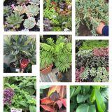 樹木の移植・庭木の植え替え・植栽 ǸINJYA造園