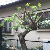 庭木の伐採・伐根 Q.G クイックガーデンズ