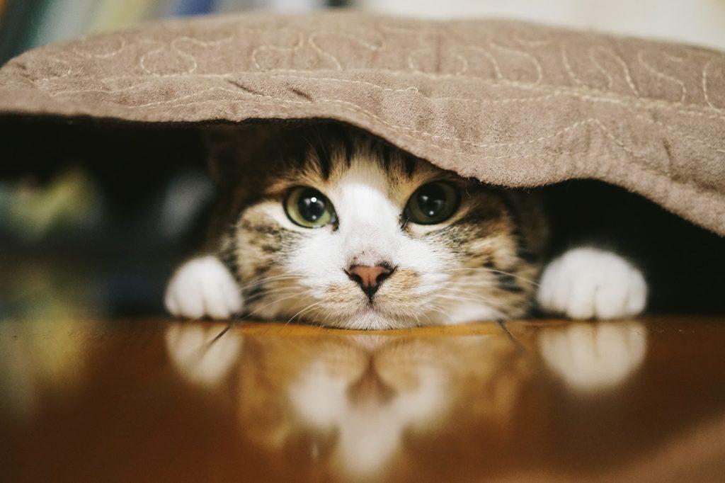 処分する布団にくるまってる猫画像