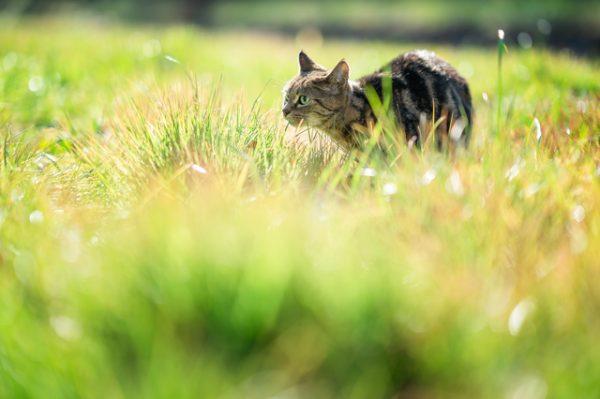 猫の撮影おすすめシーンとカメラの設定