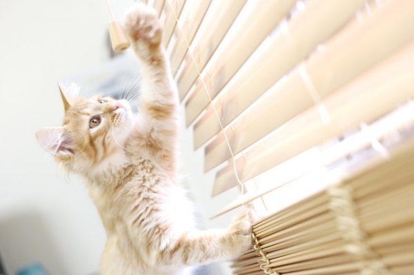 愛猫をカメラで撮影するときのコツ3つ