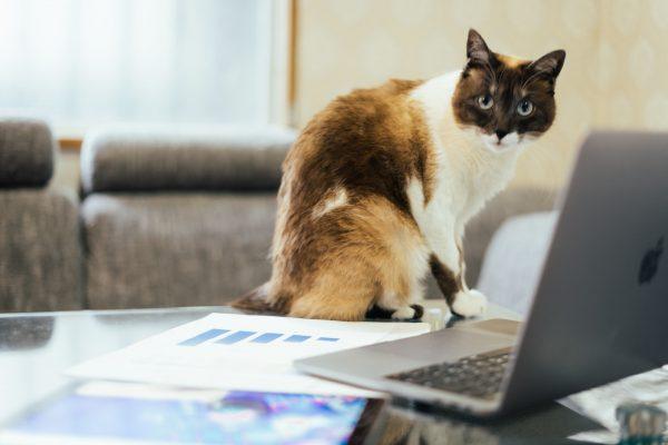 書類と猫の画像