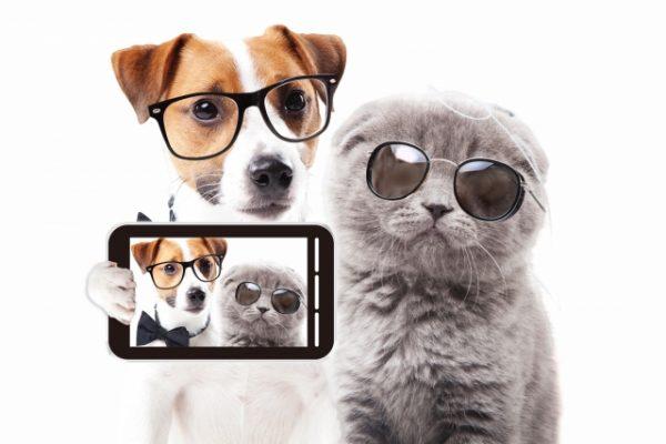 ペット写真を撮るときのおすすめアプリ3選