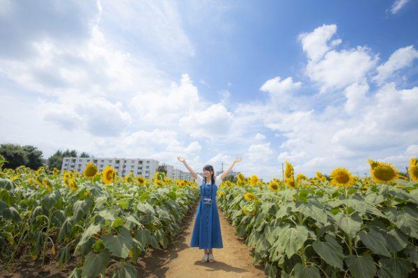 ヒマワリ畑と女性